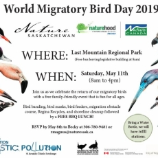 World Migratory Bird Day!  Free, Family-Friendly event. Register now!