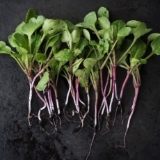Learn to grow microgreens - an inexpensive way to add important vitamins to your diet.  Fun for families!