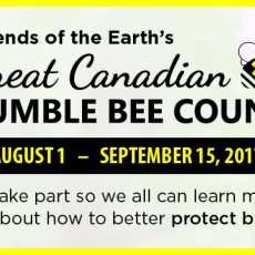 The Great Canadian Bumble Bee Count!  Get involved!
